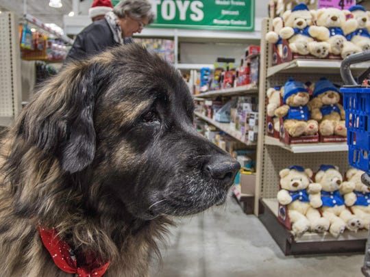 A dog named Alvin stands in an aisle at Menards while shopping with owners Julia and Steven Roberts for the Toys for Tots program on Tuesday, Dec. 19, 2017.