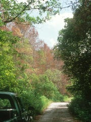 Take a scenic drive on Loop Road in the Big Cypress