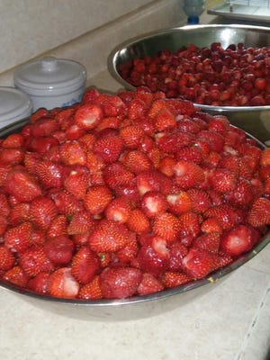The Eichers will make jam from these luscious strawberries for Susan's wedding this summer and family use all year.