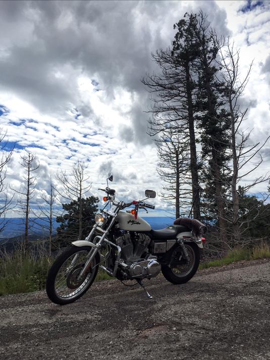 Golden Aspen-Bike-1-.png