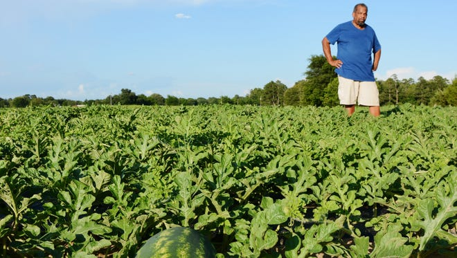 Melvin Rutherford, a watermelon grower in Hawkins, said hot, sunny days over the next few weeks will have his watermelon patch ready for the Fourth of July.