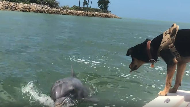 While on a fishing trip with Captiva Island Fishing Charters, Eileen McGunagle captured the interaction between Lucy the dog and her dolphin friend, Gus.