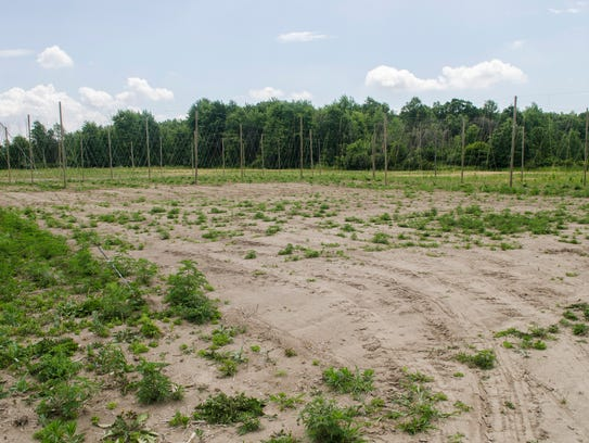 A proposed grassing area in the middle of a field of