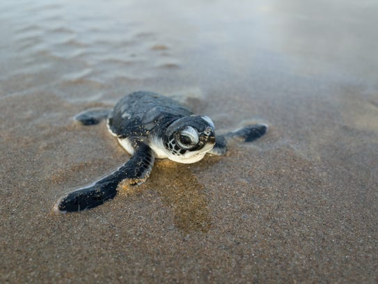 Learn about sea turtles with an up-close and personal