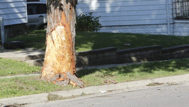 Ronald B. Martin, 32, died early Monday when he crashed his car into this tree at the southwest corner of Ferry and Ward streets.