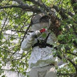 Beekeeper Joe Hurley removes a bee hive from a tree in a Pittsford backyard.
