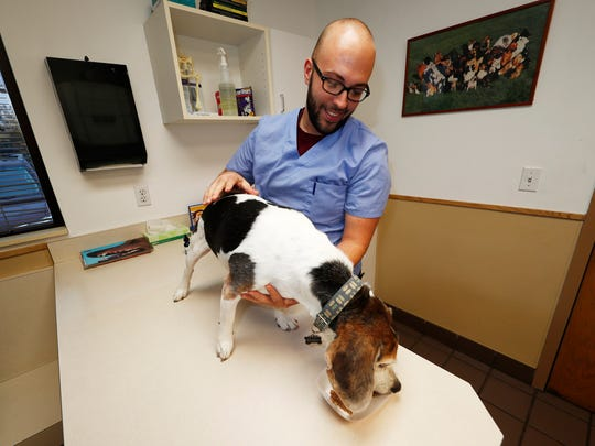 Luke Byerly guides his 14-year-old beagle, Robbie, as the dog eats his food treated with CBD oil during a break at Byerly's job as a technician at a veterinary clinic in east Denver.
