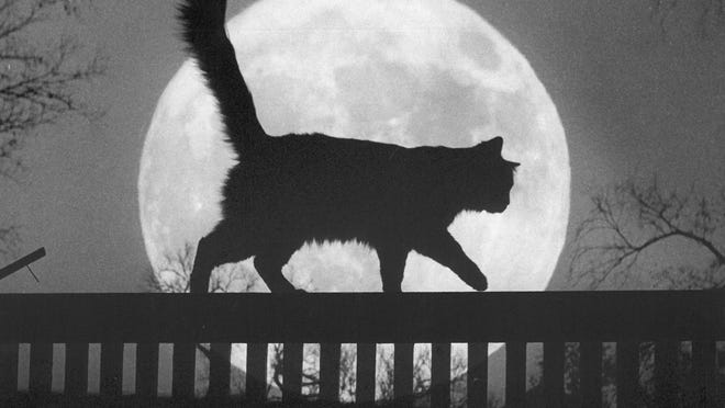 A Topeka black cat, silhouetted against a full moon, conjures up visions of ghosts, witches and monsters as local youngsters begin preparations of Halloween. Although most of the young trick-or-treaters will be in costumes designed to scare their victims, no doubt some of the young demons themselves may feel a few shivers up their spines if this cat crosses their path.