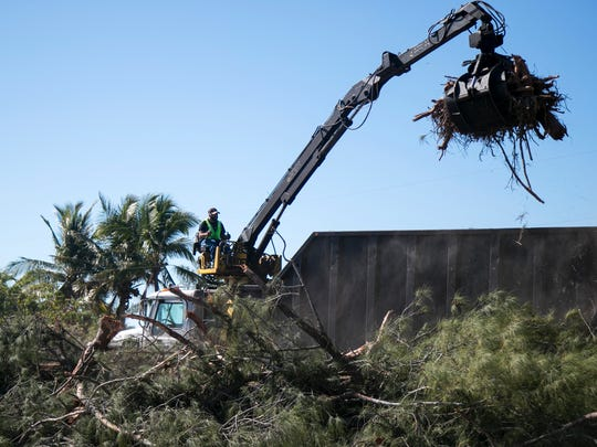 Australian pines on the second Sanibel Causeway island are being removed becuase they are unstable due to erosion following Hurricane Irma.