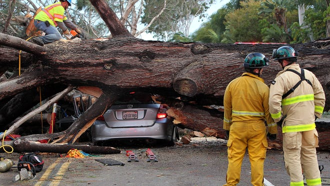 Firefighters work to remove a large tree that fell across multiple lanes of traffic, killing a motorist, in Pacific Beach, Calif., Sunday, Jan. 31, 2016.