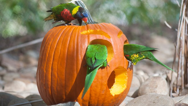 Animals at the Nashville Zoo received special enrichment to celebrate Halloween on Tuesday, Oct. 24.