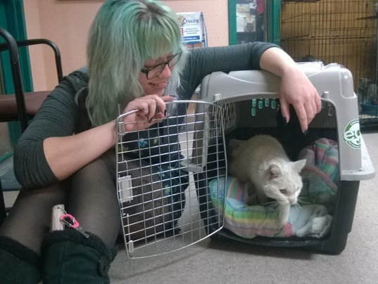 20-year-old cat adoption photo