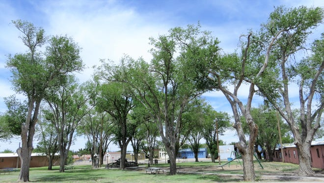 Carrizozo is counting its trees in connection with the New Mexico State Forestry.