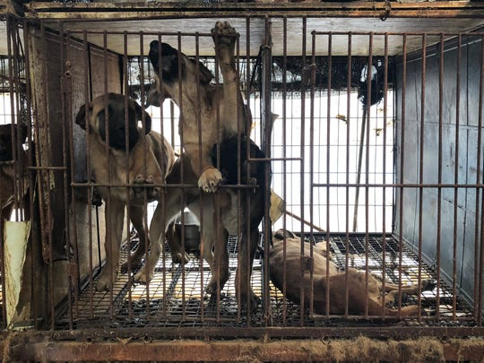 Dogs claw at their cages as a third dog lies dead at