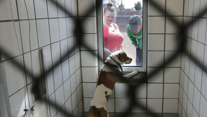 A couple looks for a dog to adopt at El Paso Animal Services recently.
