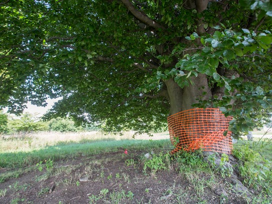 A non-native tree is marked to be saved at a property