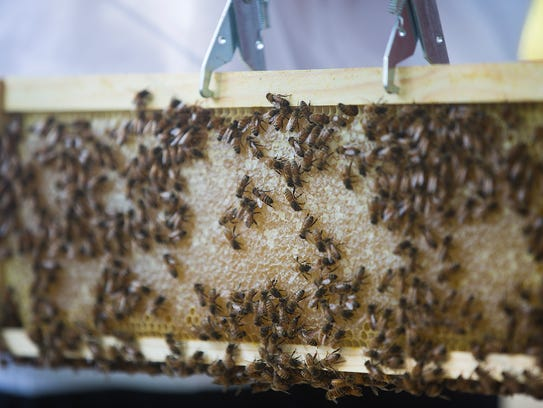 Clare Heinrich, 17, of Urbandale checks on her beehive
