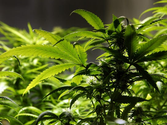 Marijuana businesses may soon open in the city of Palm