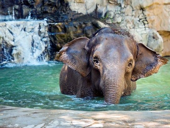 World Elephant Day festivities are happening all weekend