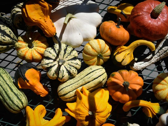 Ornamental gourds and pumpkins on display at the Goebel
