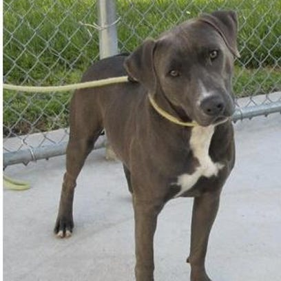 A family vacationing in the Panhandle found the dog