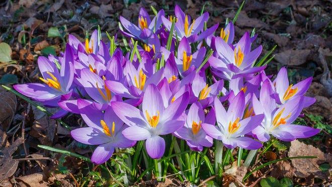 Spring home improvement is always a spirit lifter.