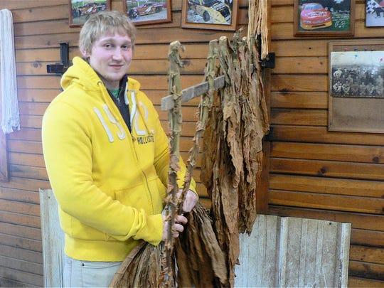 Raymond Lund strips tobacco in his family's strip house