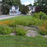 Plant a rain garden, and help protect the bays
