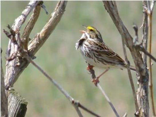 Fenner birds 3.jpg