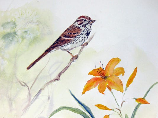 NatureJounral-song-sparrow