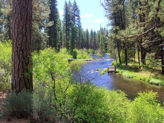 There are many views of the Metolius River on the Metolius River Loops Scenic Bikeway.