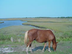 Assateague Island's pristine beaches and unsullied environment draw millions of visitors.