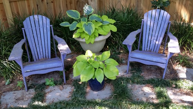 Hostas in containers can be blended throughout the shade garden where they combine well with ferns and other woodland shade plants and brighten up a patio or deck.