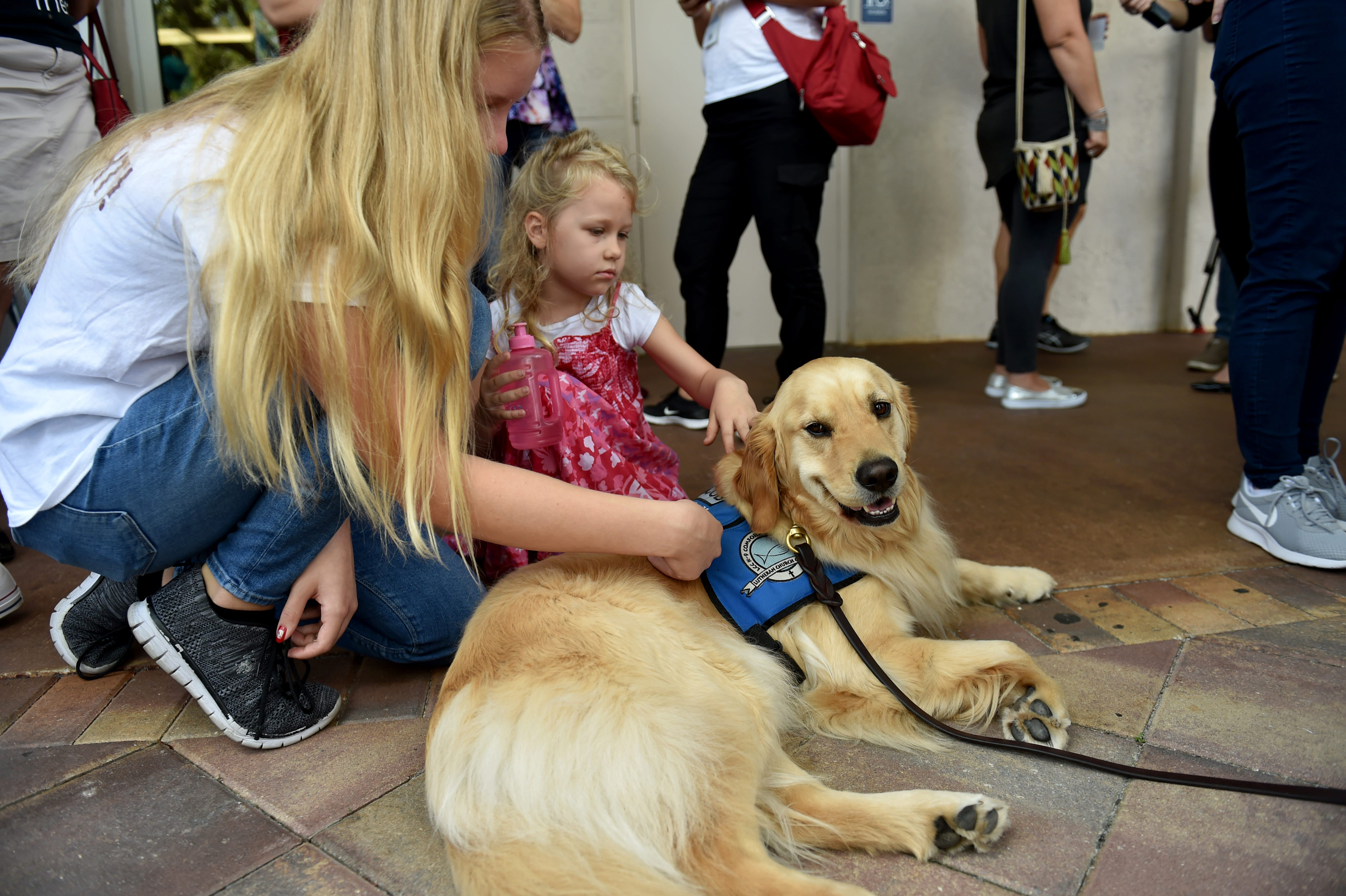Image of: Plane Florida School Shooting Comfort Dogs Offer Support To Grieving Community Real Property Management Seacoast New Hampshire Florida School Shooting Comfort Dogs Offer Support To Community