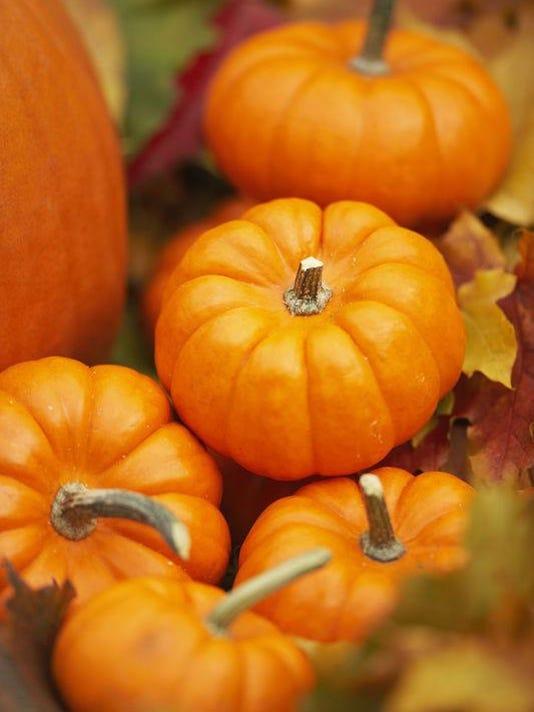-pumpkin.jpg_20090929.jpg