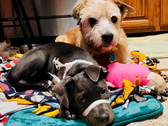 Halsey has found a buddy in Grandpa, another dog in
