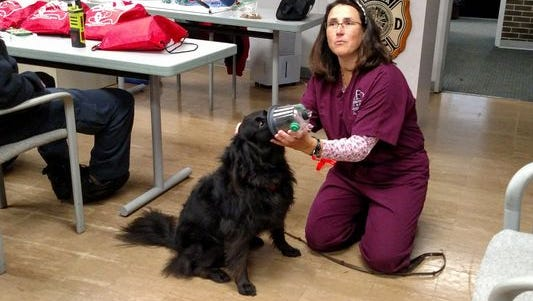 Dr. Heather Robertson, a veterinarian at Animal Emergency Center in Novi, demonstrates to Livonia firefighters how to use a pet oxygen mask on her rescue dog, Jack.