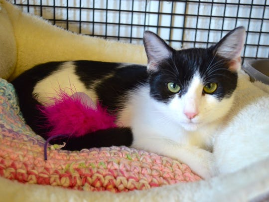Teara is available for adoption at 11129 Michigan Ave.