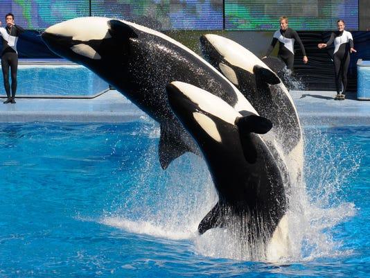 SeaWorld-Killer Whale Environment
