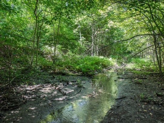 West Brook Preserve in West Milford is under the management