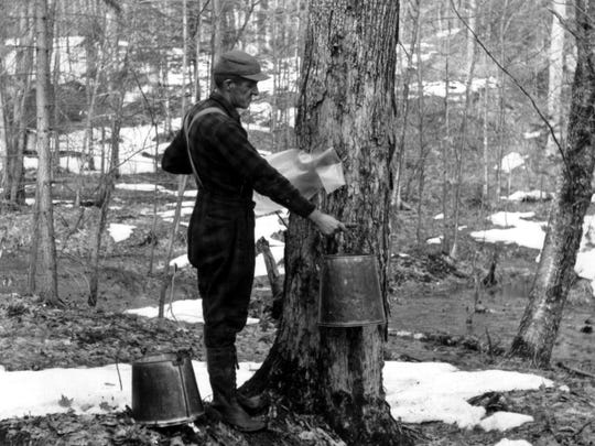 1950 - 1960 (undated; exact location unknown): A Vermonter maintains an upright bearing while collecting sugar maple sap.