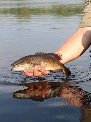 Under a new Live Release program offered by the Wisconsin Department of Natural Resources, fish caught-and-released may be entered for state fish records.