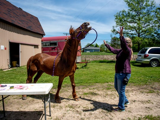 Nancy Bailey prompts her horse Clifford to mimic the 'MGM lion' on Thursday, May 24, 2018, at Bailey's home in Charlotte. Clifford, a 27-year-old Morgan horse, creates abstract paintings by using his lips to push a sponge covered in paint across the canvass. Bailey, who is an artist herself, takes Clifford to events for kids and adults to demonstrate the horse's artistic ability.