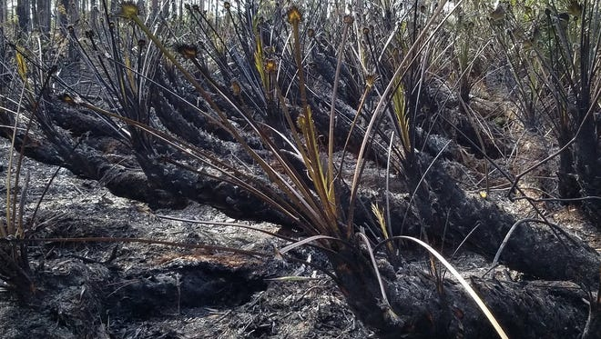 The point of origin for the 5-acre wildfire in St. Lucie County Jan. 14, 2018, was found.