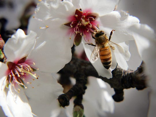 Welcome bees this weekend in Camarillo.