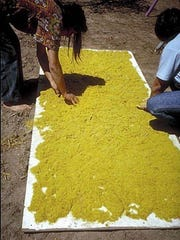 The pollen is collected an dried for use in ceremonials.