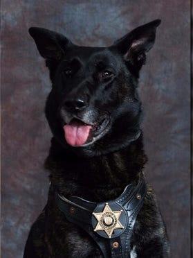 Cash, a Mason County Sheriff's K9.