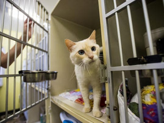 Cat Adoption Lafayette La