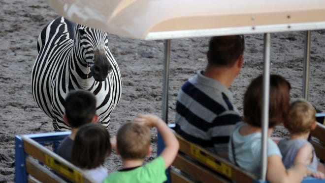 Visitors encounter a zebra at the Gulf Breeze Zoo.