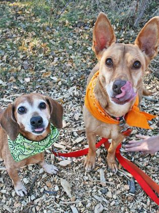 stc-1121-pet-of-the-week-lily-and-ginger